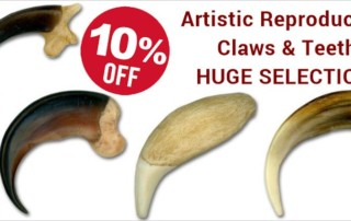 Artistic Reproduction American Made Claws and Teeth